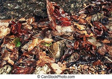 old wet leaves