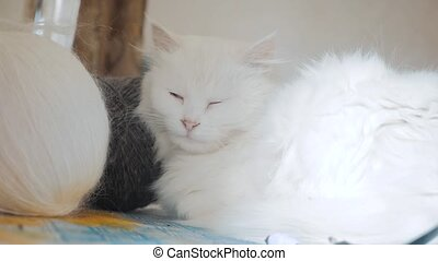 old white cat sleeping on the table next to the balls for...
