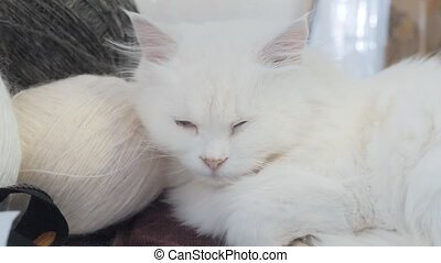 old white cat sleeping on the table next to the lifestyle...