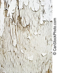 Old white wooden texture