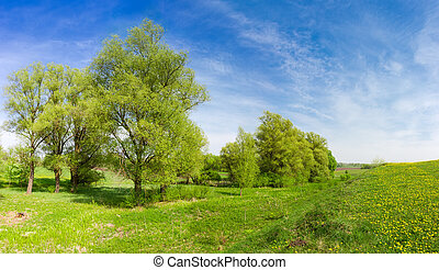 Old willows in floodplain near the hilly grassland overgrown with grass and dandelions in springtime, panoramic view