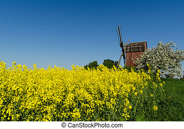 Old windmill by blossom rapeseed field and apple tree