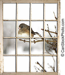 View of bird through old window pane after snow storm