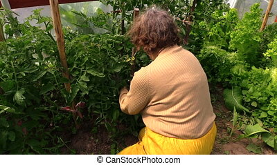 old woman care hothouse - Closeup of senior farmer gardener...