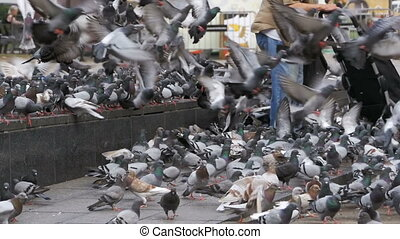 Old Woman Feeding Pigeons on the Street in Slow Motion - Old...