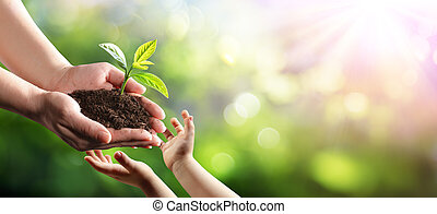 Old Woman Giving Young Plant To A Child Environmental Protection For New Generation