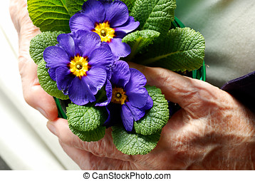 Old woman holding a spring flower