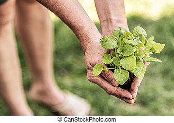 old woman holding seedlings of young plants