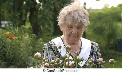 Old woman in the background of growing peonies - Old woman...