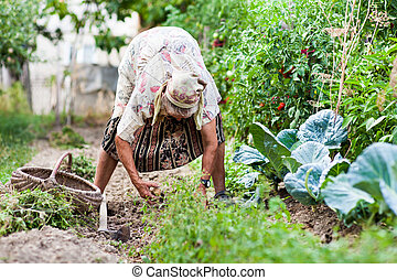Old rural woman weeding in her garden with a hoe