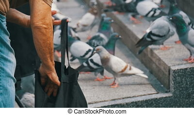 Old Woman is Feeding Pigeons on the Street - Old Woman is...