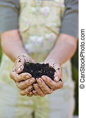Closeup image of old woman hands holding compost. Senior female hands holding a handful of peat free compost