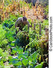Old woman working in her garden