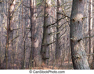 old wood - 1