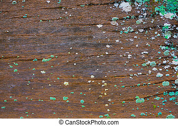 Old wood background with green moss