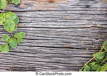 old wood board with plant