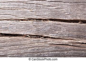 Old wood bog oak , texture grunge background.