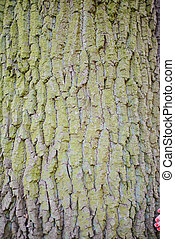 old wood tree bark texture with green moss