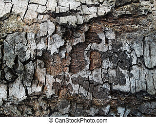 Old Wood Tree dry Texture Background