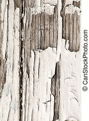 Old wooden background with white chapped paint .