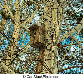Old wooden birdhouse hanging on a birch