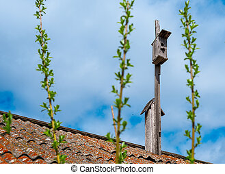 Old wooden birdhouse on the old roof