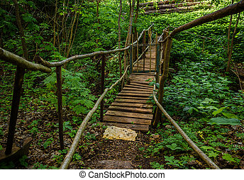 old wooden bridge in green forest