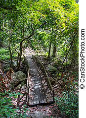 Old wooden bridge in jungle, Chiang Mai, Thailand