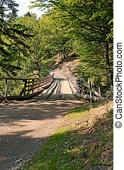 Old wooden bridge in the a summer