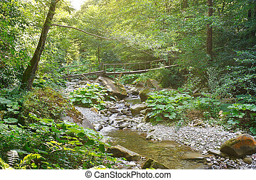 Old wooden bridge over a mountain creek in forest in the morning sunlight