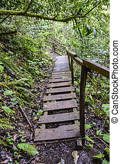 old wooden bridge steps in the jungle overgrown abandoned