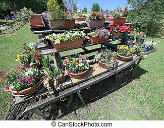 old wooden cart festooned with many pots of flowers in the meadow