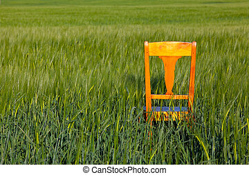 Old wooden chair in the barley field