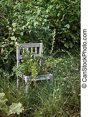 Old wooden chair in wild garden - Old wooden chair in wild...
