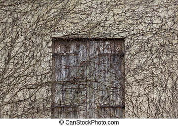 old wooden door and wall overgrown by plants