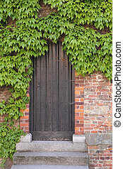 Old wooden door with ivy