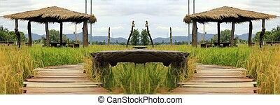 Old wooden floor walkways in rice fields