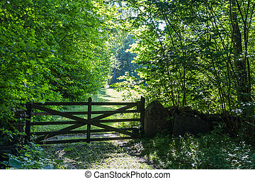 Old wooden gate in a lush greenery