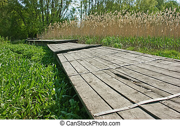 old wooden pier on the marsh in reeds