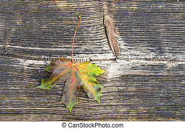 old wooden plank background with maple leaf and texture