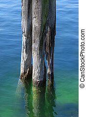 Old wooden post in a lake