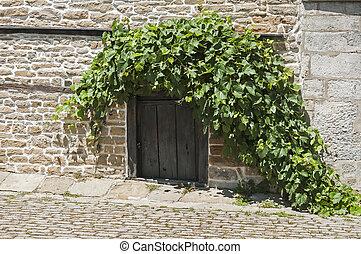 Old wooden small door and vine