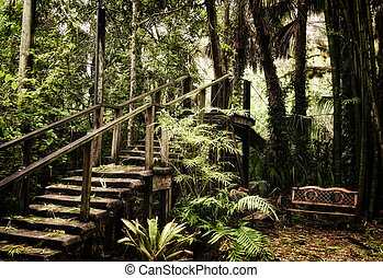 old wooden stairs inside subtropical forest