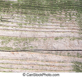Old wooden surface painted with green paint