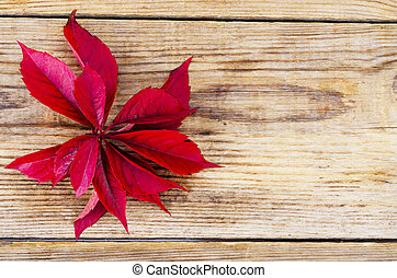 Old wooden surface with red autumn Parthenocissus leaves
