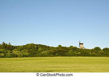 Old wooden windmill by a green wheat corn field