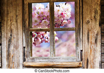 Old wooden window frame, spring, flowering trees. - Wooden...
