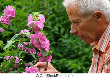 Older man gardening - Older man taking care of his garden