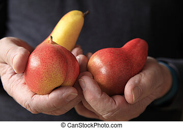 Older man holding colorful pears