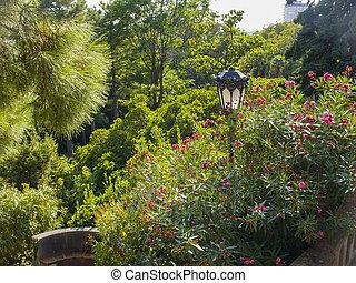 oleander, buisson, vieux, lanterne